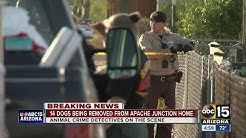 14 dogs removed from Apache Junction home