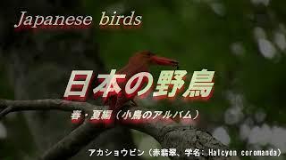 日本の野鳥(春・夏編)鳴き声 小鳥 癒し