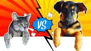 CAT vs DOG КОШКА ПРОТИВ СОБАКИ! ЧАСТЬ #2  МЕТИС ОВЧАРКИ С ДРАТХААРОМ  JustFamily Kids funny animals