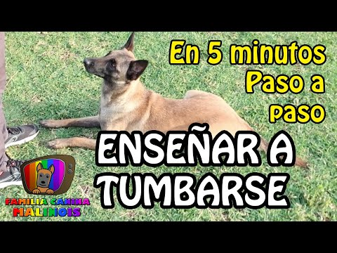 Adiestramiento canino para cachorro video #1 from YouTube · Duration:  25 minutes 38 seconds