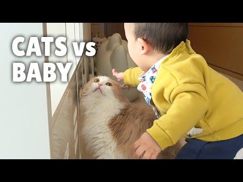 Cats vs Baby