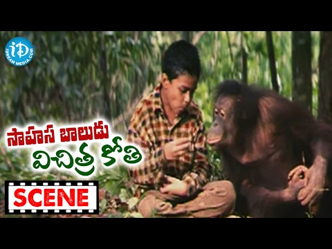 Sahasa Baludu Vichitra Kothi Movie Scenes - Chimpanzee Saves Anvesh || Vijayashanti
