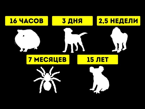 Сколько разные животные могут обходиться без воды
