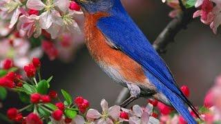طيور تأكل الحبوب  BIRDS EAT GRAINS