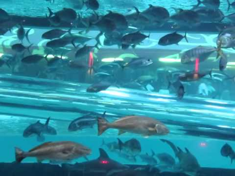 Golden Nugget Hotel Shark Fish Tank Swimming Pool