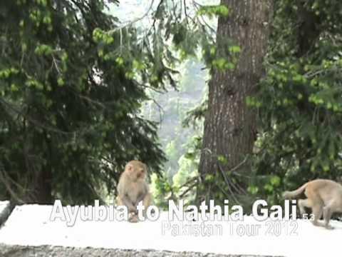 Ayubia to Nathia Gali