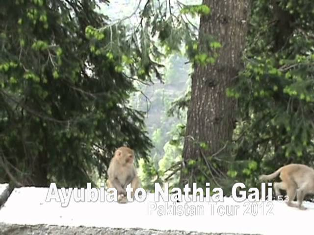 Ayubia to Nathia Gali Travel Video