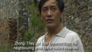 Cooking | Wood saving stoves