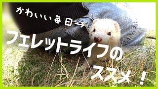 いたちラボ関連URL http://ferret-lab.twitachi.link/ https://twitter....