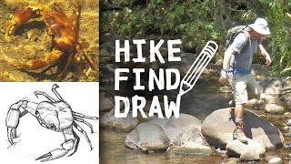 Hiking a Creek in Costa Rica & Drawing a Crab