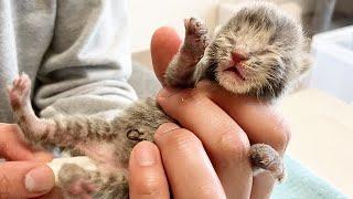 排泄の手助けで暴れる赤ちゃん猫