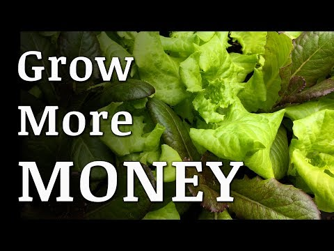 The Most EXPENSIVE VEGETABLE You Should Be Growing!