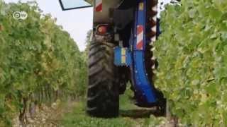 منتجو النبيذ الألمان بين تقاليد الماضي وتحديات الحاضر | الجورنال