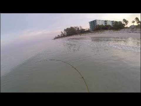 Early Morning Multispecies Surf Fishing - Florida Gulf of Mexico