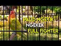 Lovebird Paud  Bulan Ngekek Fighter Durasi Panjang  Mp3 - Mp4 Download