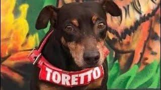 Troca de forro interno capacete LIBERTY pró Tork