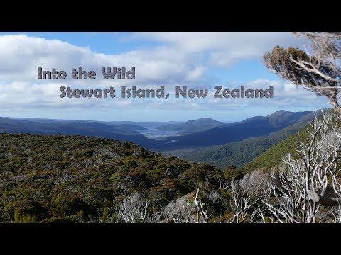 Into the Wild on Stewart Island, New Zealand