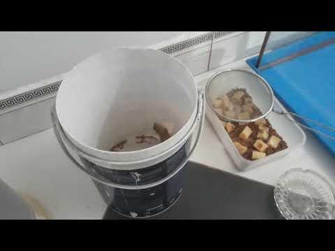 Cách nuôi kỳ nhông con mới bắt được .va cho nó ăn sâu gạo