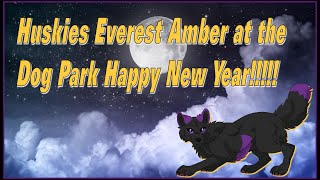 Huskies Everest Amber at the Dog Park Happy New Year!!!!!