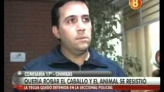 Yegua arrestada - Informe Canal 8 San Juan
