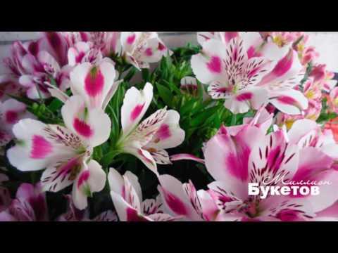 Альстромерия и букеты из альстромерий от интернет магазина Миллион Букетов