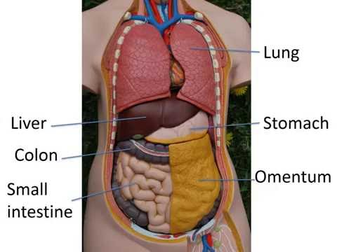 Gastrointestinal anatomy and physiology, Part 1
