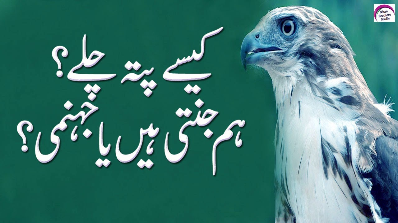 Amazing Quotes In Urdu | Best Collection Of Inspirational Quotes | Motivational Urdu Quotes