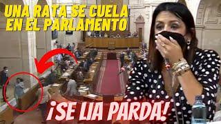 Una RATA se CUELA en el Parlamento de Andalucía 😂¡Y PASA ESTO!😂