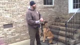 How to Teach the Forced Fetch to Any Dog Part 1