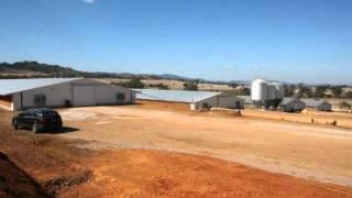 Poultry Complex -  5 Sheds Now On Line  - Neil Follington