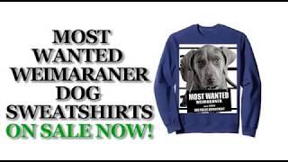 Most Wanted Weimaraner Funny Dog Sweatshirts - Men's, Women's, Kid's - Black, Heather Grey, Navy