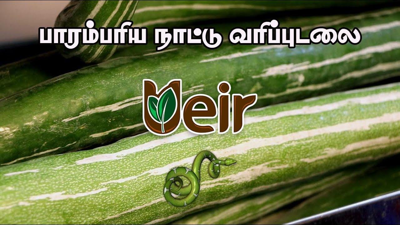 பாரம்பரிய நாட்டு வரிப்புடலை / Ueir Organic Foods