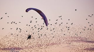 Horacio Llorens dancing in the air with 1 million starlings.
