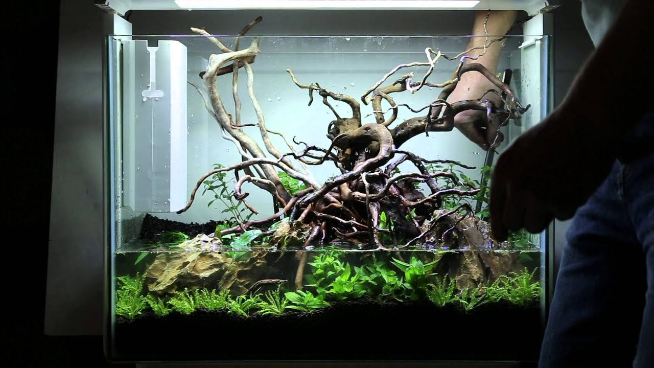 Superfish Home 80 - Aquascaping step-by-step - YouTube