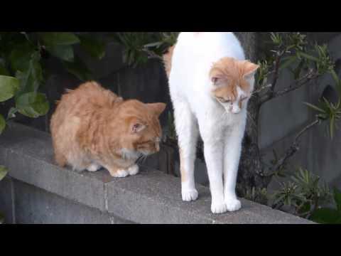 Cat stretching : ストレッチしている猫