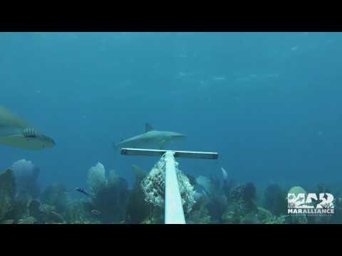 Annual Monitoring of Marine Megafauna in Banco Chinchorro Atoll & Xcalack, Mexico 2016