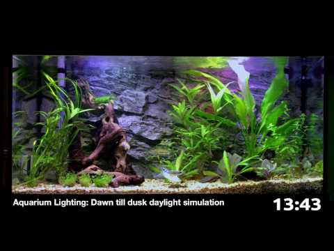 Aquarium Lighting: Dawn Till Dusk Daylight Simulation