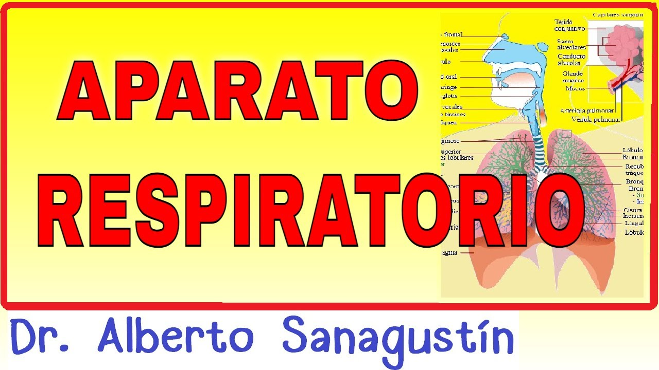 APARATO RESPIRATORIO ✅ anatomía y fisiología #neumología - YouTube
