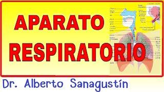APARATO RESPIRATORIO ✅  anatomía y fisiología #neumología