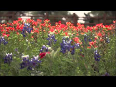 Wildflowers in the Texas Hill Country: Visit Fredericksburg TX