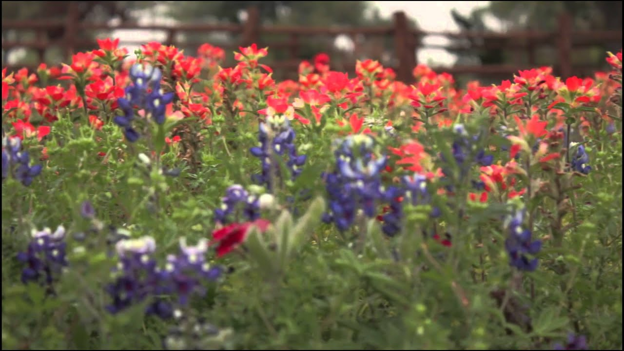 Wildflowers In The Texas Hill Country Visit Fredericksburg Tx Youtube