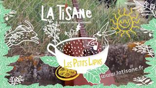 COMMENT DEMARRER LA JOURNEE AVEC LE SOURIRE ? les petits lapins (clip du groupe La Tisane )