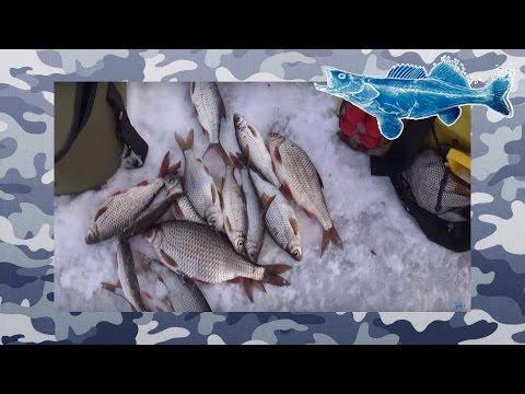 Ловля Плотвы На Реке Днепр  Зимняя Рыбалка