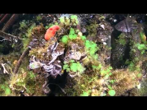 Palau JellyFishLake Paul Ranky cimwareukandusa W