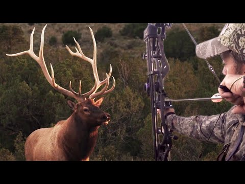 BOW HUNTING New Mexico Elk – Willi's DREAM Bull @ 47 YARDS!  Pure Hunting S9 E6