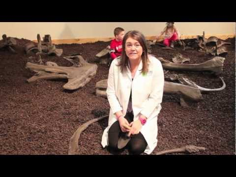 Science in 60(ish) Seconds: Digging for Dinos