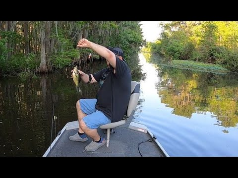 Fishing Bayou Segnette 2020 - Bass, Perch And Sac-A-Lait - Along With An Alligator Visit!