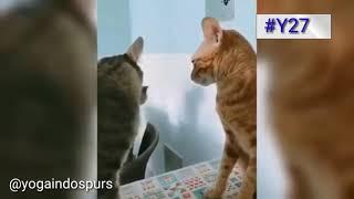 Bojonegoro - Kucing Ketahuan Mesum