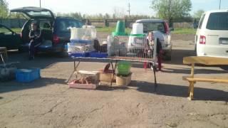 Птичий рынок в Могилеве 1