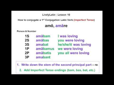Amo in latin